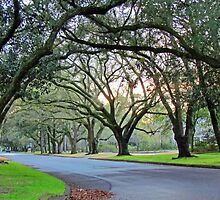 Tree Lined Street In Wilmington, NC by Cynthia48