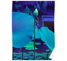 Blue Lotus Bud Poster