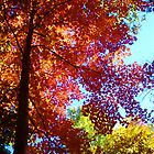 Orange Red Yellow Trees Blue Sky by Candace Byington