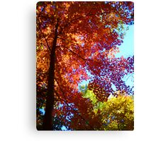 Orange Red Yellow Trees Blue Sky Canvas Print