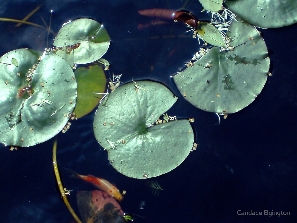 Lily Pond with Goldfish by Candace Byington