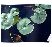 Lily Pond with Goldfish Poster