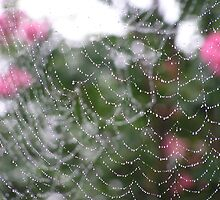 dew drops on spider web by Jamaboop