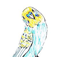 Budgie in Love Photographic Print