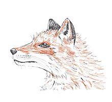 Orange Fox by drknice