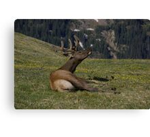 Very Relaxed Canvas Print