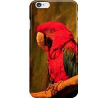 Striking Red Macaw iPhone Case/Skin