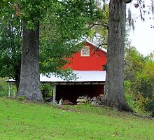 Red Shed by Cynthia48