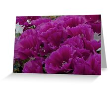 Gorgeous Godetia Greeting Card