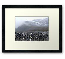 King Penguin Rookery Framed Print