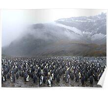 King Penguin Rookery Poster