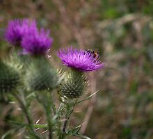 Thistle Hive by Pyewacketpaws