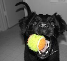 Color of Fetch by principiante