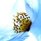 Soar by Fine Art Photography by Paul Hamilton