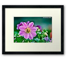 Purple bee Framed Print