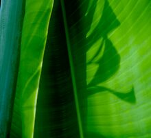 Green 4 by Janos Sison
