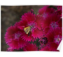 NC of flowers and insects Poster