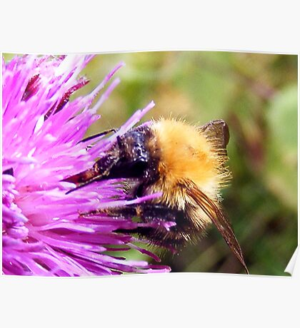 The Bumble Bee and the Thistle Poster