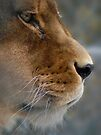 Lioness Profile by Martha Medford