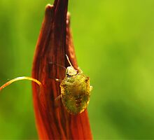 Bug on red by Gaby Swanson  Photography