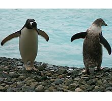 PENGUIN BUDDIES Photographic Print