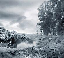 Rural 1 - #2 by danise tang