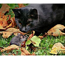 CAT MEETS RAT Photographic Print