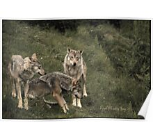Three Grey Wolves Poster