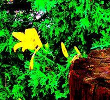 Yellow by Jennifer  Hammann