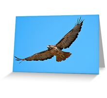 Red Tail! Greeting Card