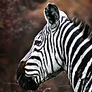 Portrait of a Zebra by Scott Ward