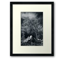 Larches of Dull Wood Framed Print