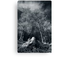 Larches of Dull Wood Canvas Print