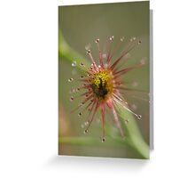 The Sundew Trap Greeting Card