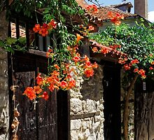 Flowers stretching out over the gates of an old house in Nessebar, Bulgaria by atomov