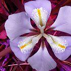 Iris by Roz McQuillan