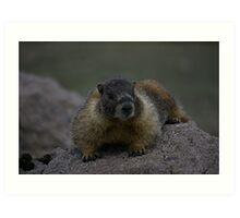 Marmot III Art Print