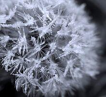 Icy Needles by Jenni77