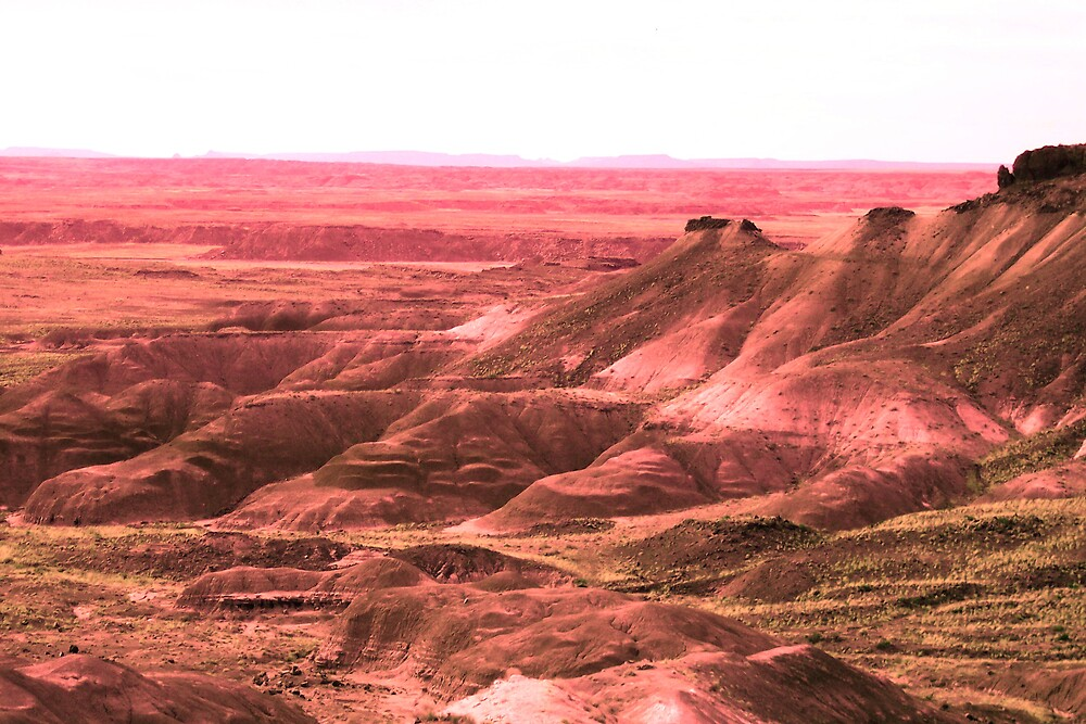 painted desert arizona by Sheila McCrea