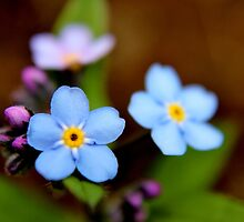 Blue Forget-me-nots I by Kathleen Daley
