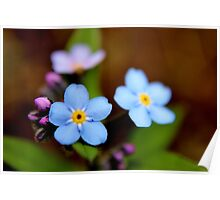 Blue Forget-me-nots I Poster