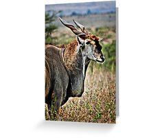 Portrait of an Eland Greeting Card