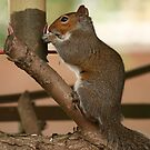 squirrle 1 by Roger  Barnes