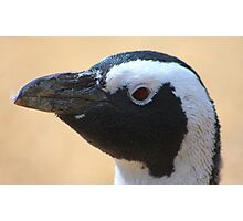Penguin portrait......... Photographic Print