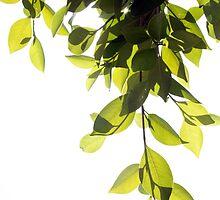 Vertical Leaves by ftrlksbrght