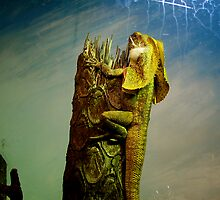 Frilled-Neck Lizard by AuXillary