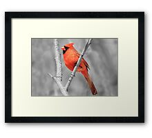 Male Cardinal Selective Coloring Framed Print