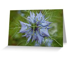 Love-In-The-Mist Greeting Card