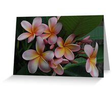 pink frangipanis Greeting Card