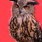 Luna, the owl. by Fabrizia Tocchini